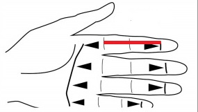 measure finger from palmar crease to distal finger crease